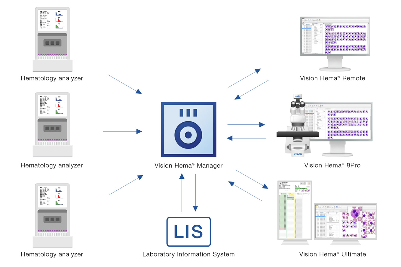 Vision Hema Manager — Standardization of blood smear analysis procedure